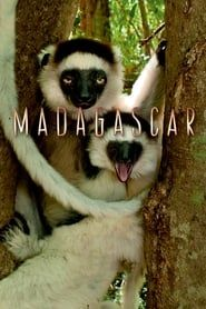 Madagascar - La série streaming vf