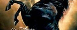 La légende de l'étalon noir online