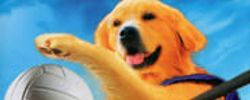 Air Bud superstar online