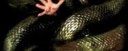Anacondas: À la poursuite de l'orchidée de sang online