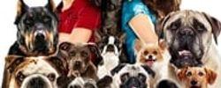 Palace pour chiens online