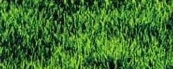 La belle verte online
