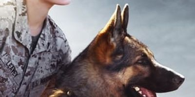 Megan Leavey en streaming