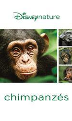 Chimpanzésen streaming
