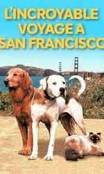 L'incroyable voyage II : À San Franciscoen streaming