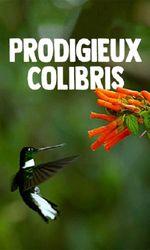 Prodigieux colibrisen streaming