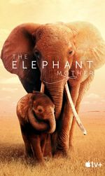 The Elephant Motheren streaming
