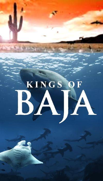 Kings of Baja movie