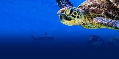 Voir Turtle Odyssey en streaming vf