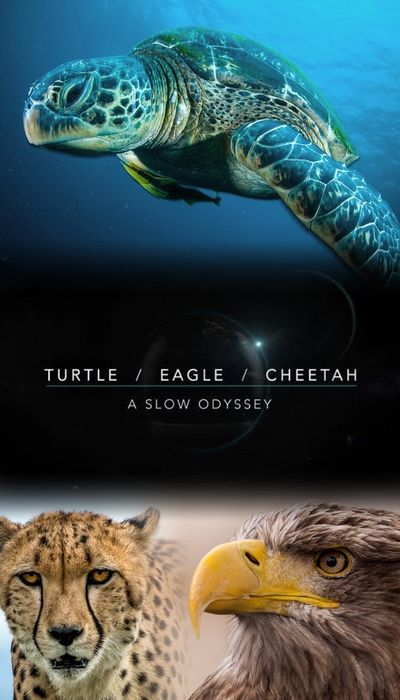 Turtle, Eagle, Cheetah: A Slow Odyssey movie