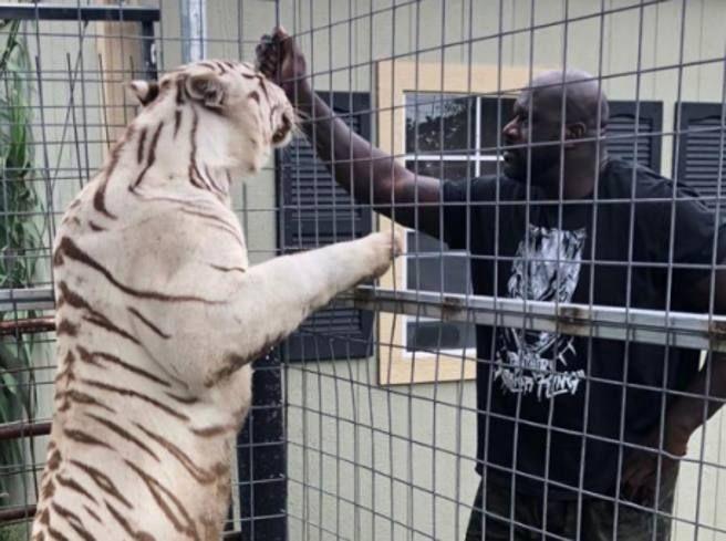 Nba come uno zoo tigre Shaquille gli squali Gilbert Arenas persino cammello Carmelo Anthony