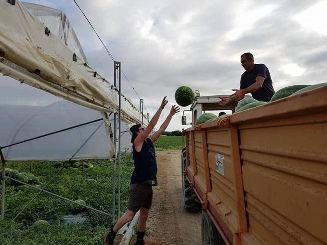 Boom richieste lavoro per 'azienda agricola «Gli anni scorsi nessuno rispondeva all'annuncio»