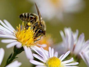 Allergia ad api, vespe e calabroni, campagna per rispondere ai dubbi