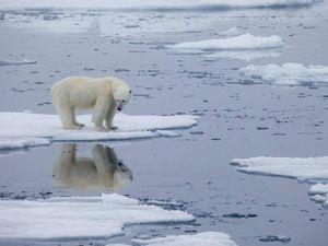 Le bugie dei fondi green: hanno azioni di grandi società di combustibili fossili