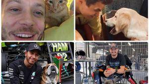 Da Brno e Roscoe al gatto Rossano: gli amici a quattro zampe dei piloti