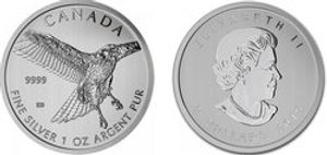 BIRDS OF PREY -  RED-TAILED HAWK - 1 OUNCE FINE SILVER COIN -  2015 CANADIAN COINS 03