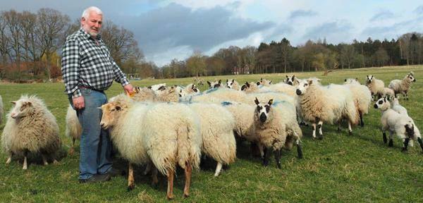 """Wardenburger verliert 18 Tiere: """"Ich wollte Schafe halten, kein Fort Knox bauen"""""""