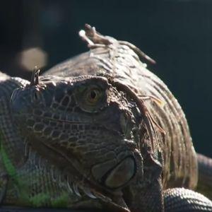 Игуаната атакува - най-забавните моменти в ATP тура