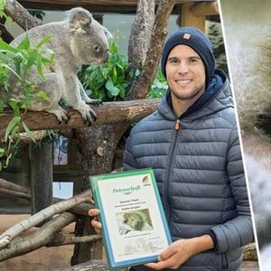 Доминик Тийм осинови коала