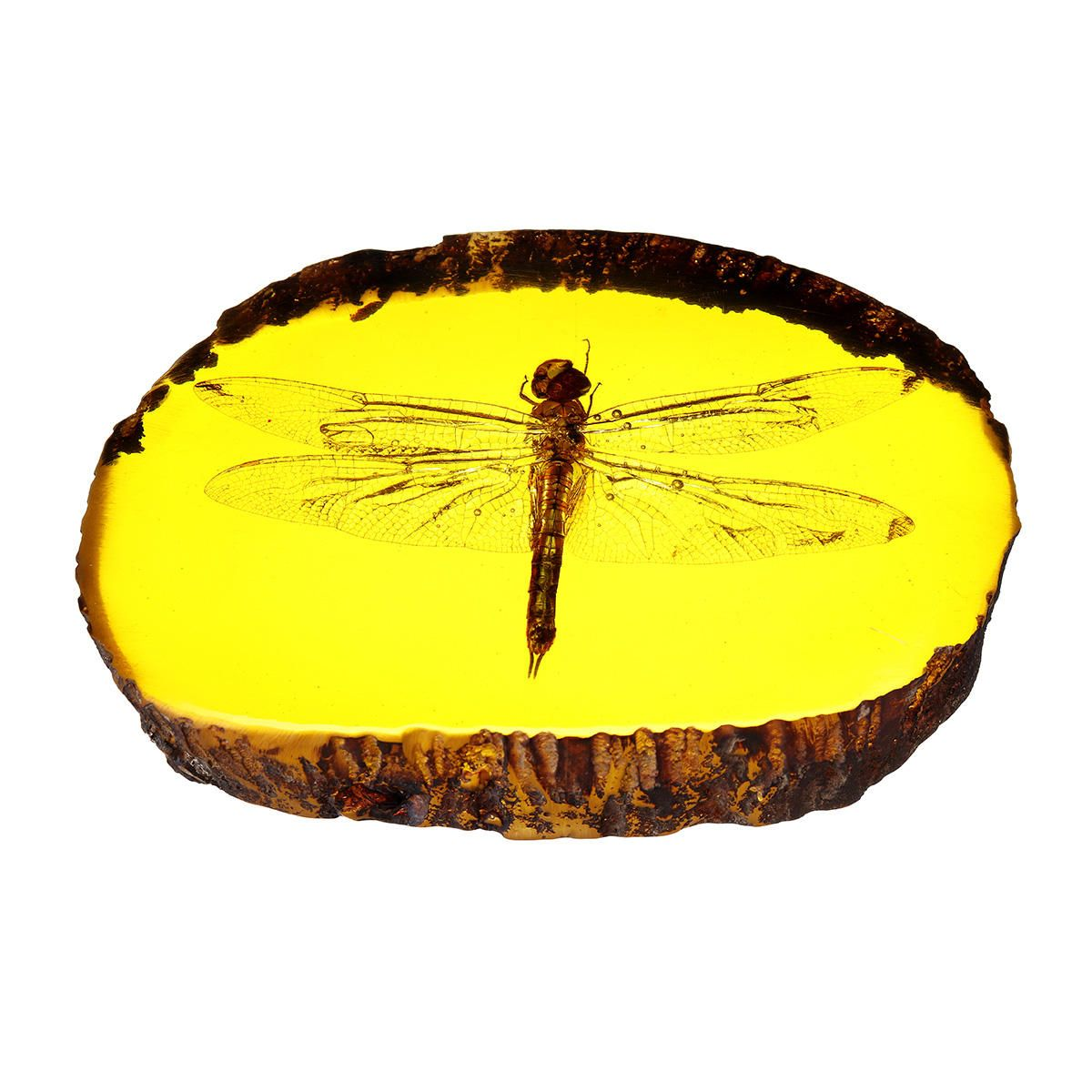 OUG US$9.70 Amber Fossil Insects Dragonfly Manual Polishing Insect Specimens Decorations