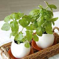 Creative DIY Mini Lucky Egg Potted Plant Office Desktop Home Decor