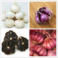 Egrow 100 Pcs/Bag Multi-petals Red Garlic Seeds Organic Vegetables Kitchen Food Seasoning for Home Garden Bonsai Planting
