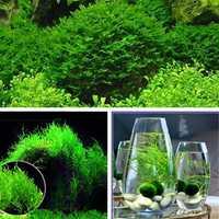 Egrow 200PCS/Pack Moss Live Aquatic Plants Seeds Aquarium Water Grass Bonsai Flower Landscape Decoration Ornament