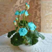 Egrow 5Pcs Lotus Seeds Blue Green Bowl Lotus Water Lily Seeds Rare Aquatic Flower Plant Seed
