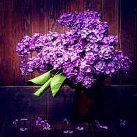 Egrow 100Pcs/Pack Japanese Lilac Clove Seeds Garden Perennial Flowers Aromatic Bonsai Plants Seeds