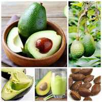 Egrow 10Pcs/Pack Avocado Seeds Persea Americana Mill Pear Seed DIY Healthy Fruit Salad