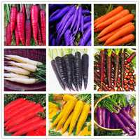 Egrow 500 Pcs/Pack Colorful Carrot Seeds Red White Purple Origanic Healthy Vegetable Plant Seed