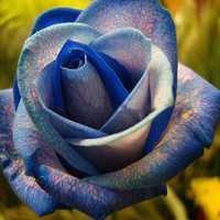Egrow 50Pcs/Pack Holland Rainbow Rose Seeds Gardening Bonsai Flower Seeds