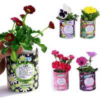 DIY Mini Zodiac Lucky Flower Potted Office Desktop Plant Decor