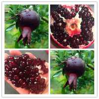 Egrow 30Pcs/Pack Black Pomegranate Seeds Home Garden Delicious Fruit Tree Bonsai Seeds