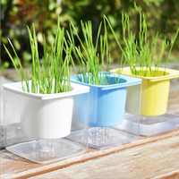 Yani Remove Hair Ball Cat Grass Seed Cultivation Set Wheat Seed Square Pot Planting