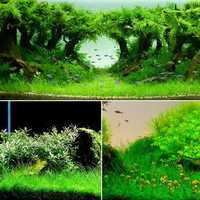 Yani Aquatic Plant Seeds Indoor Ornamental Grass Seed Grass Landscaping Decoration