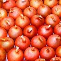 Egrow 300 Pcs/Pack Giant Onion Seeds Vegetable Seed Kitchen Food Seasoner Potted Plants