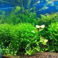 Egrow 1000Pcs/Bag Aquarium Plants Seeds Artificial Aquarium Plant Decoration Fish Tank Submersible