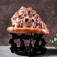Home Decorations Natural Shell Bull's Mouth Helmet Conch Coral Sea Snail Fish Tank Adorn Ornament