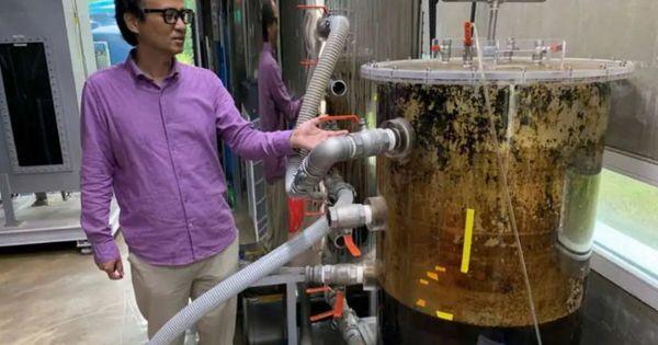 BeeVi, il water del futuro: così le nostre feci riscaldano il palazzo che abitiamo, ecco cosa state vedendo