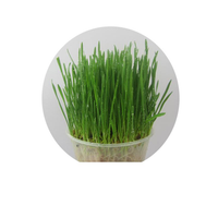 Yani Cat Dog To Hair Ball Cat Grass Seed 800 Capsules A Pack
