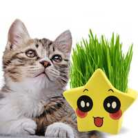 Cartoon Five-pointed Star Rye Cat Grass with Grass Seeds