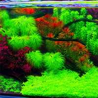 Egrow 1000 PCS Aquarium Plant Seeds Pine Tree Semillas Raras Plantas Aquatic Fish Tank Decoration Trees Seeds