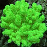 Egrow 1000 PCS Aquarium Plant Seeds Fish Tank Moss Fern Aquatic Seeds Landscape Decoration Grass