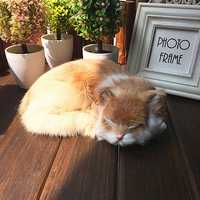 Realistic Sleeping Cat Lifelike Plush Fake Kitten Fur Furry Animal Figurine Toys Home Decorations