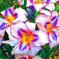 Egrow 100PCS/Pack Lily Seeds Rare Peruvian Lily Alstroemeria Bonsai Plants Mix-Color Beautiful Lilies Flower For Home & Garden Decoration