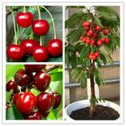 Buy Egrow 20 Pcs/Bag Cherry Seeds Home Indoor Fruit Bonsai Dwarf Cherry Tree Seed Planting