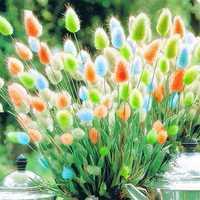 Egrow 100Pcs/Pack Rabbit Tail Grass Seeds Mixed Color Garden Bunny Tail Grass Decor Plants