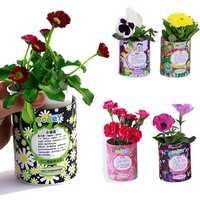 DIY Mini Zodiac Lucky Flower Potted Office Desktop Plant Decor