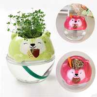 DIY Mini Cute Bear Grass Potted Plant Desktop Office Decor